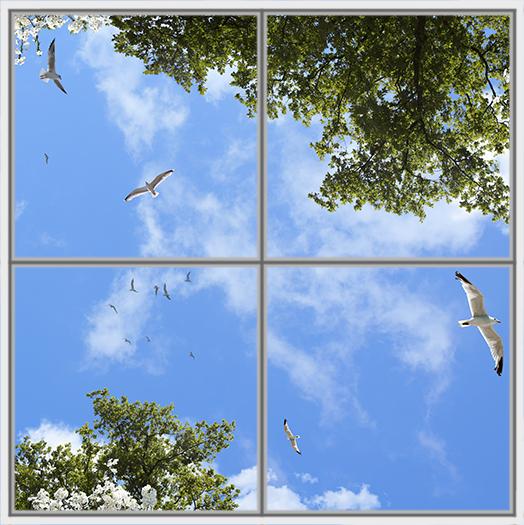 Birds Trees 4