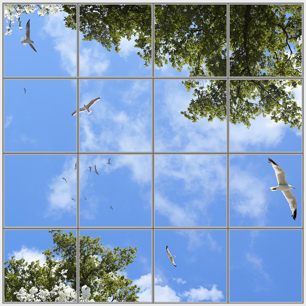 Birds Trees 16